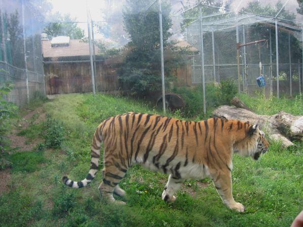 Pictures of Edmonton Valley Zoo